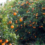 Марокко утроило поставки фруктов и овощей в Россию на фоне продэмбарго